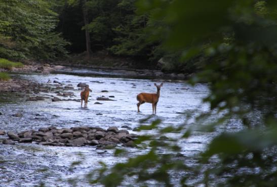 kitu kids deer camping nature