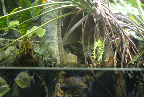 river, rainforest, aquarium, baltimore, national aquarium