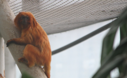 Tamarin Monkey, aquarium, Baltimore, National Aquarium,  Aquarium