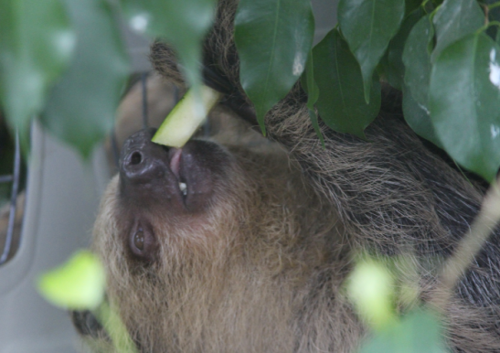 sloth, aquarium, national aquarium, baltimore aquarium, baltimore
